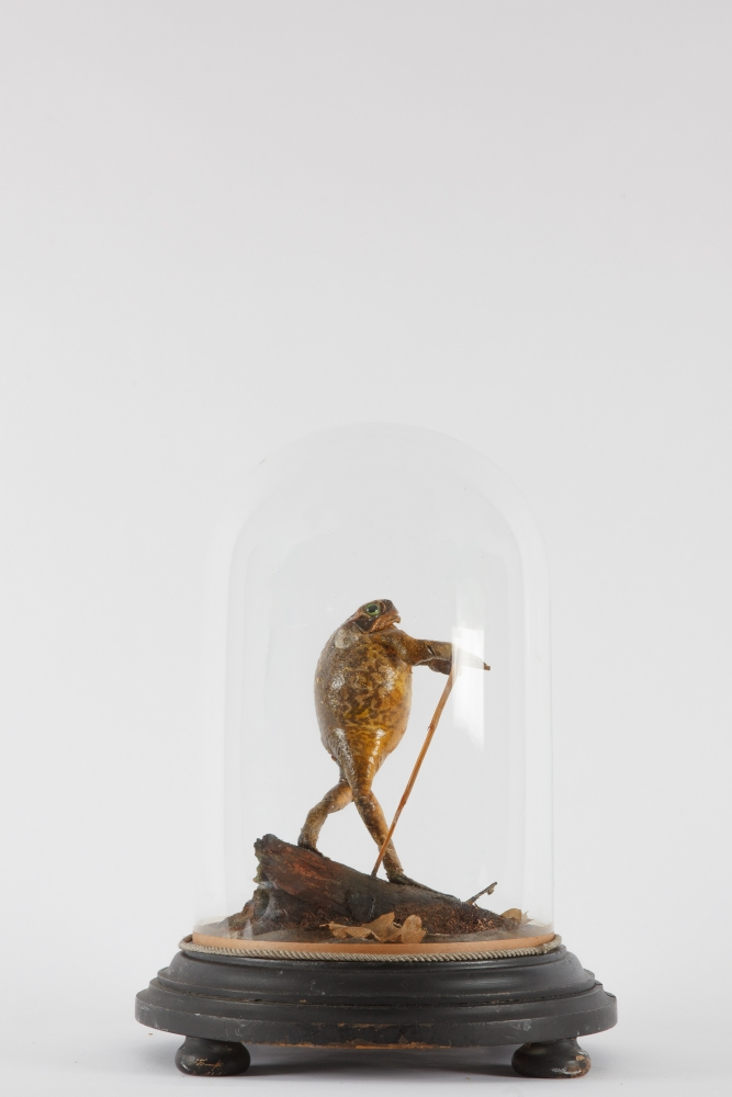 Antique Taxidermy Toad Dome