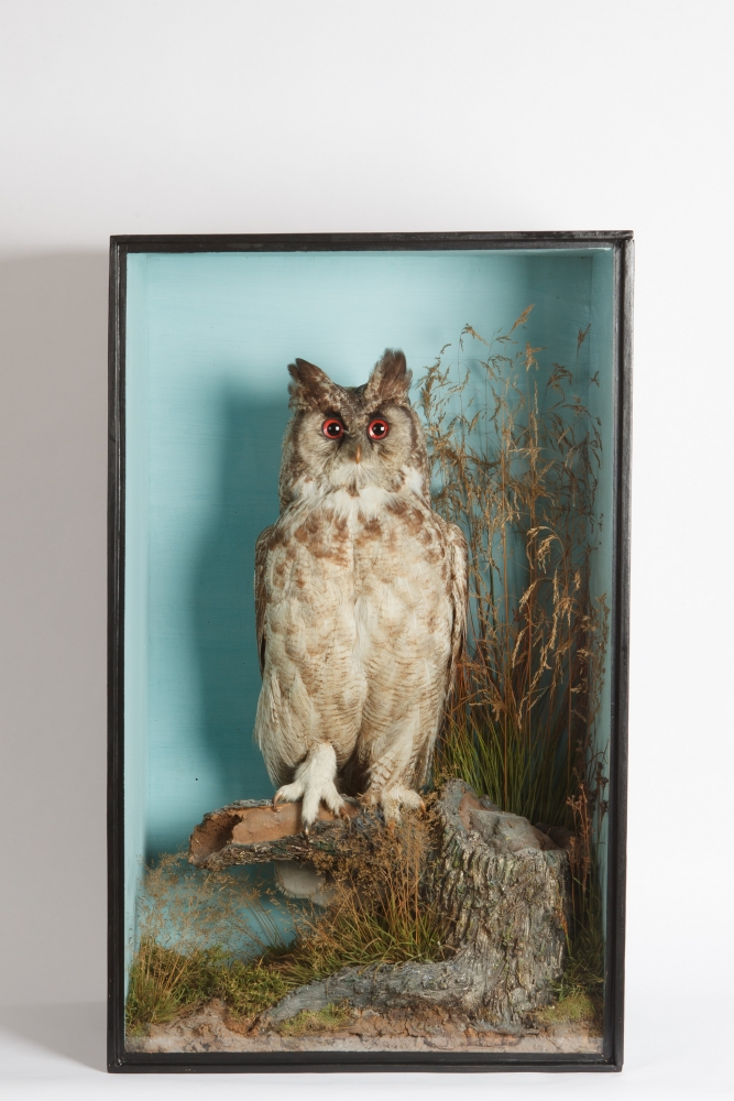 Taxidermy Great Horned Owl by TM Williams Circa 1850